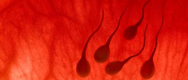 Spermatozoides booster pour l'infertilité